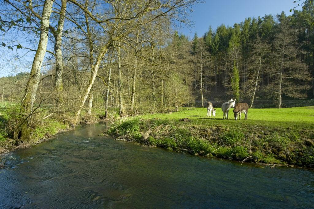 May 21st 2020: Natura 2000 day