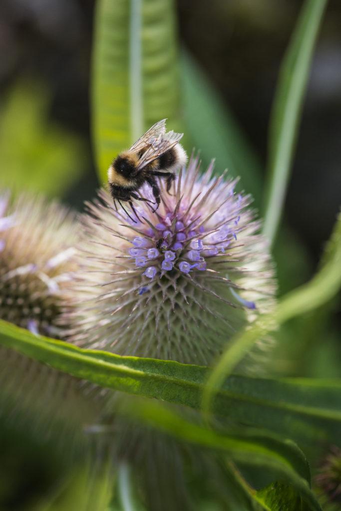 Citizen Science Projekt: Insekteräich Naturparken